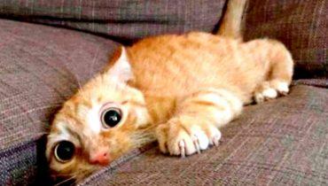 Приколы с Котами – Смешные коты и кошки 2017 |  ПОПРОБУЙ НЕ ЗАСМЕЯТЬСЯ – Смешные коты