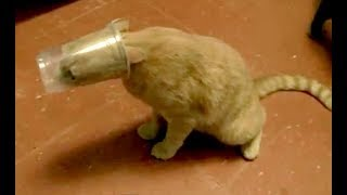 You CAN NOT IMAGINE ANIMAL FAILS FUNNIER THAN THIS – Funny ANIMAL compilation