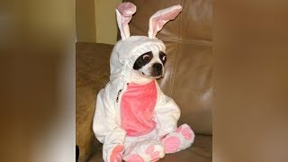 Best EASTER FAILS and FUNNY MOMENTS – You'll LAUGH all day long!