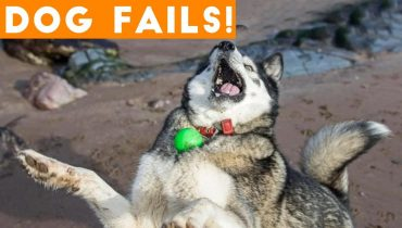 Dogs Have a Ruff Life Funny Fails Compilation   Funny Pet Videos