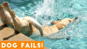 Funniest Dog Fail Compilation 2018 | Funny Pet Videos