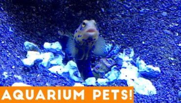 Funny Pets at the Aquarium | Funny Pet Videos