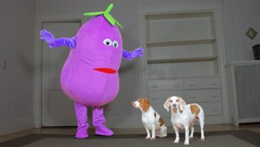 Dogs Surprised by Dancing Eggplant: Funny Dogs Maymo, Potpie & Penny