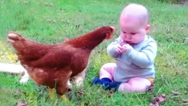 Funny Babies Meet Animals in The Small Garden – Baby Outdoor Videos