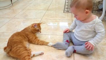 FUNNY CATS AND BABIES PLAYING TOGETHER  Funny Babies and Pets